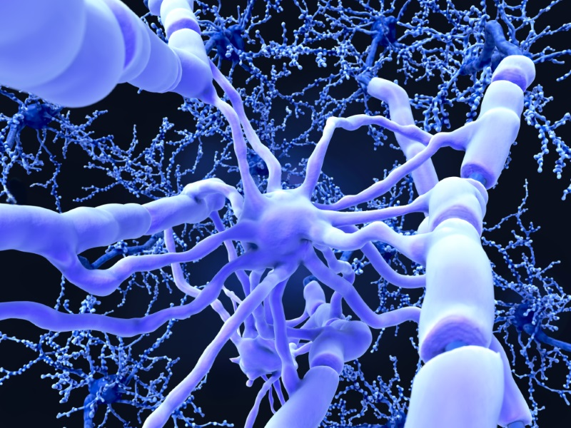 What is myelination?